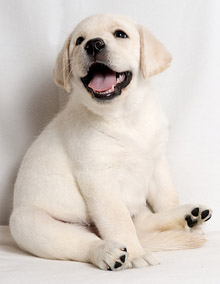 Самые маленькие породы собак в мире: фото, цена