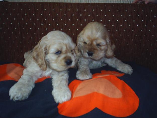 Породы маленьких собак с фото