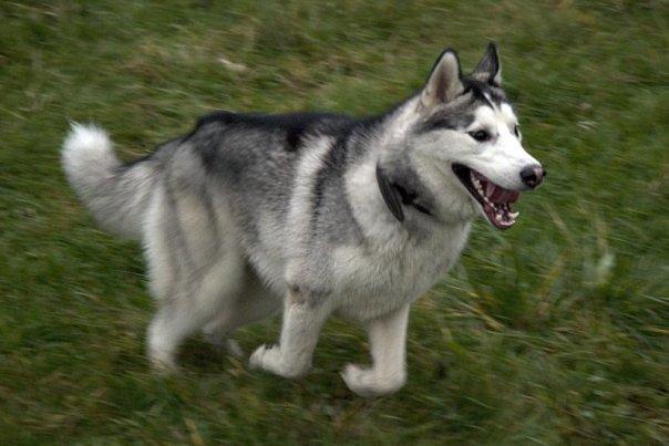 IRON DOG N°3