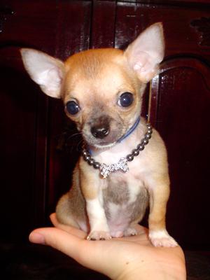 Собаки породы собак фотографии собак